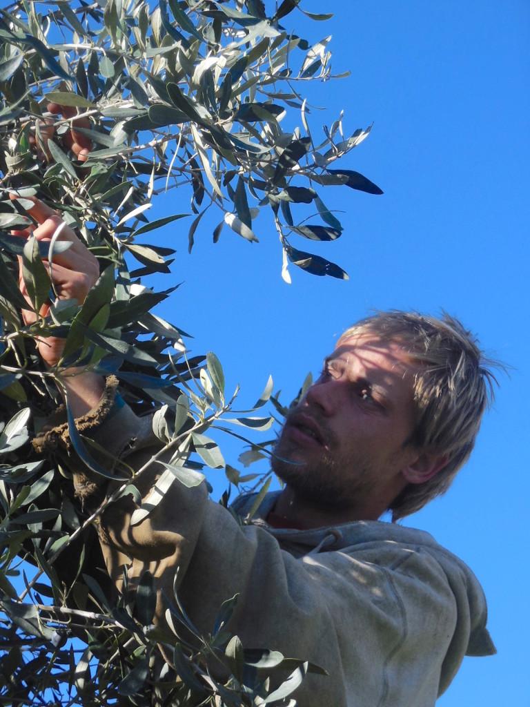 Christian bei der Ernte