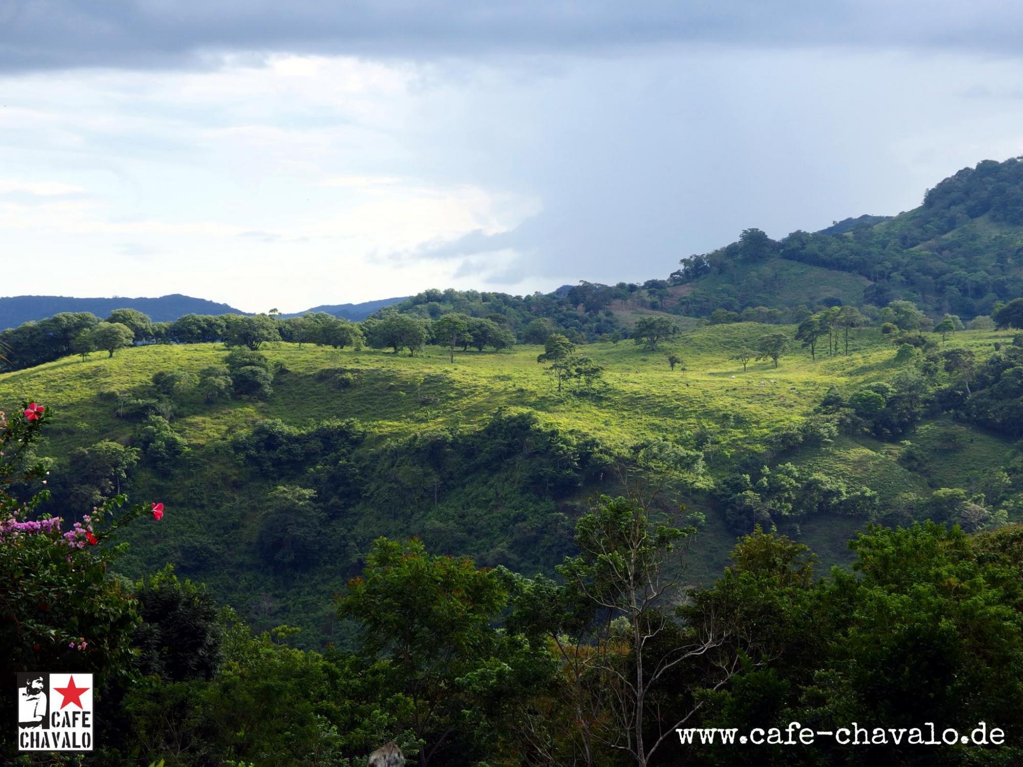CHavalo landschaft